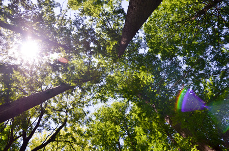 though: sunshine though the trees Stock Photo