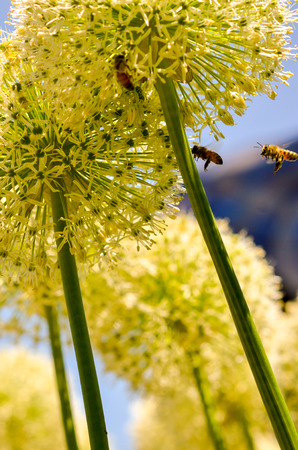 spheric: bees and flowers Stock Photo