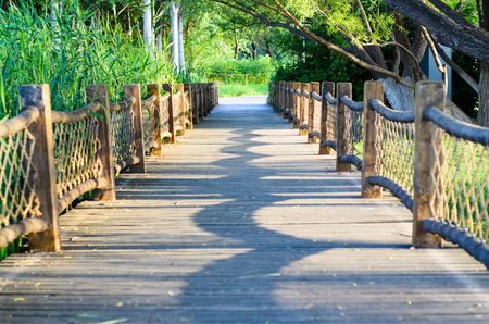 boardwalk under the green vegetation