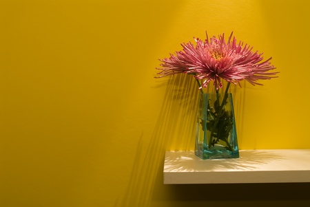 decor: mums on a shelf with long shadows of the petals Stock Photo