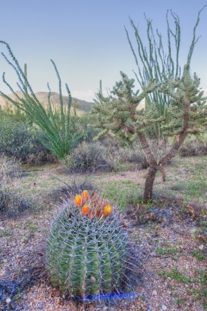 small barrel cactus in Saguaro National Park reveals color Standard-Bild