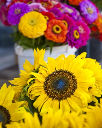 cut flowers: cut flowers at a farmers market in Condrieu France Stock Photo