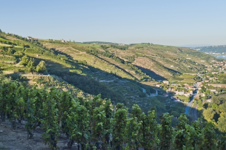 Rhone River Valley from Tupin-et-Semons Imagens - 14026843