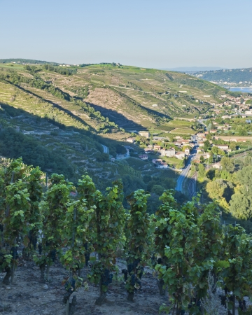 Rhone River Valley from Tupin-et-Semons