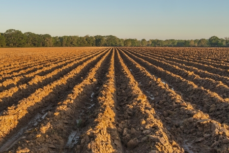Furrows in Clay Field