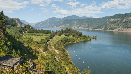 Scenic Vineyard   Orchards in Columbia River Gorge  Standard-Bild
