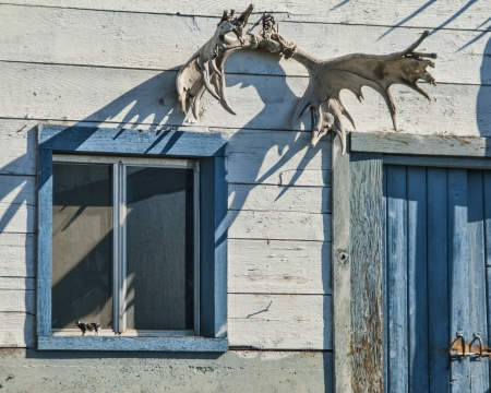 Moose Antlers on a Wall with blue window