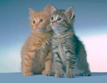写真撮影のための 2 つの子猫を借りた
