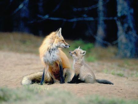 hunted: se puede sentir el amor  Foto de archivo
