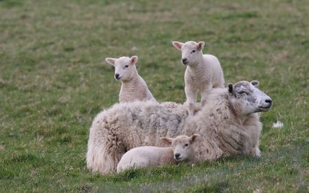 thejoy of motherhood Stock fotó