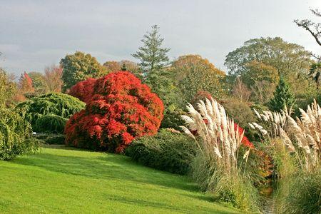wakehurst gardens uk Фото со стока