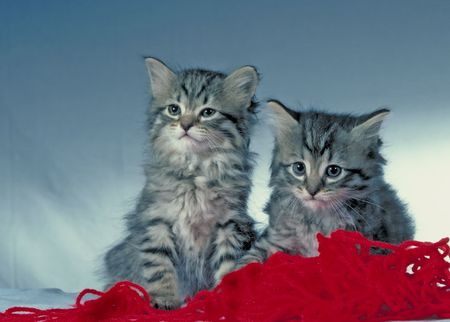 cute kittens 写真素材