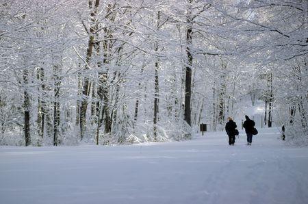 吹雪の後のキラーニー パーク