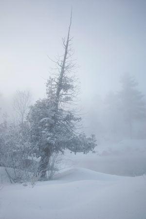 winter landscape at -35c Reklamní fotografie