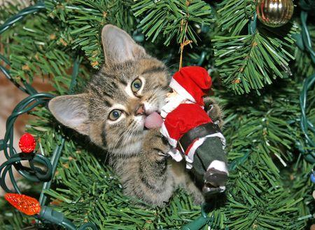 サンタを舐める子猫 写真素材