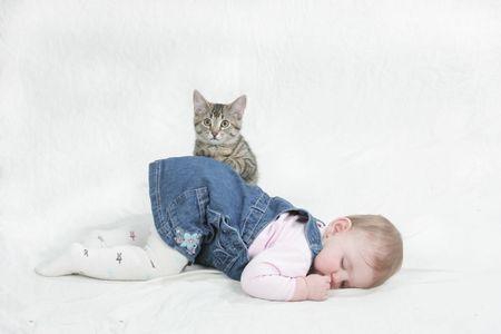 ミラベルに子猫 写真素材
