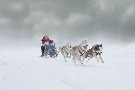 dog sled: giving it there all