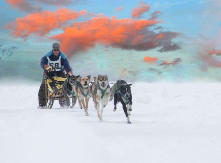 そり犬レース 5