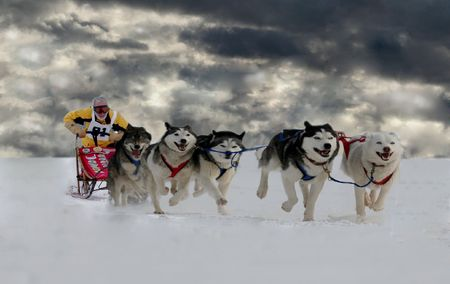 huskies: approaching storm Stock Photo