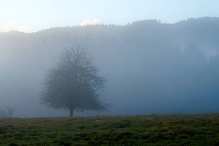 Autumnal Eifel landscape photographed in the fog