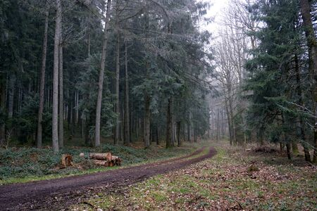 Forest trees photographed in January in Eifel Germany Stock Photo