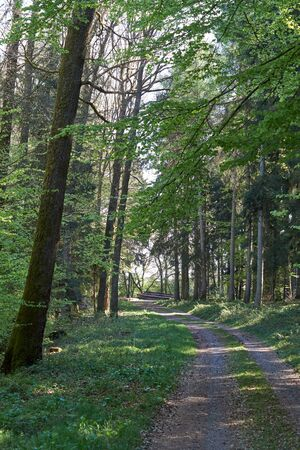 Spring hike on a forest path in the green Eifel, Germany. Stock Photo
