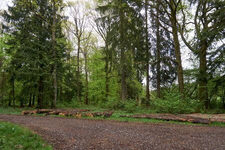 Spring hike on a forest path in the green Eifel, Germany. Stok Fotoğraf