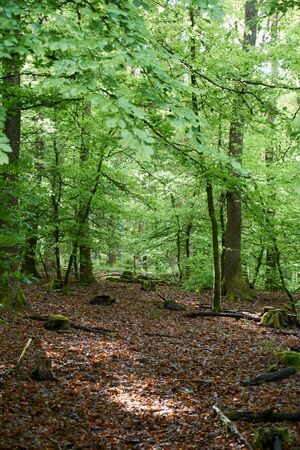 Hiking on a forest path in the Vulkaneifel, Germany