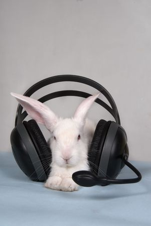 Small white rabbit with headset photo