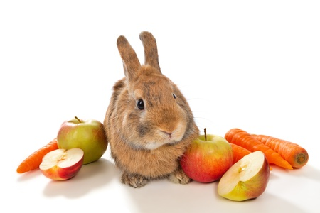 Young rabbit bunny with fresh vegetables,  isolated on white