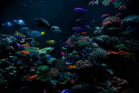 Tropical fishes on the coral reef 版權商用圖片