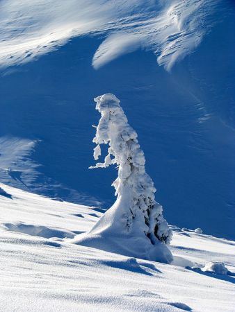 Winter fantasy. Winter landscape. Snowbound solitary fir.