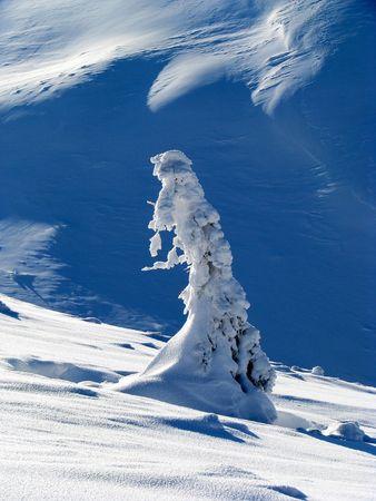 Winter fantasy. Winter landscape. Snowbound solitary fir. Stock Photo - 4871094