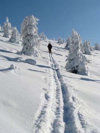 Winter travel. Single skier and snowbound firs. Stock Photo