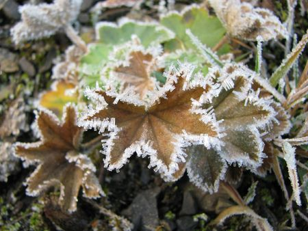 Hoar-frost.  Winter pattern on the autumnal grass. Wondrous crystals in the foliage. Wonder of nature