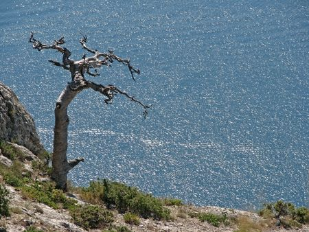 Single dry tree. Dry pine-tree in the cliff. See in the bird�s-eve view.