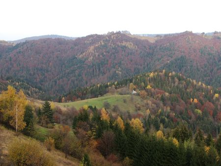 Autumnal landscape. Leaf fall in the Carpathian Mts. Woodland scenery in the mountains.