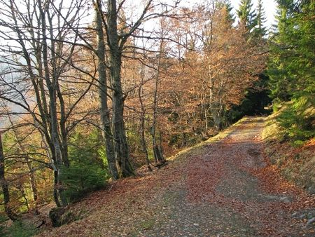 Autumnal lane. Autumnal beech forest in the Carpathian Mts. Sylvan rack-way. Stock Photo - 7033231