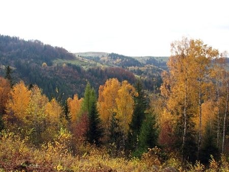 Autumnal view. Leaf fall in the Carpathian Mts. Woodland scenery in the mountains.