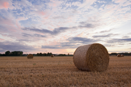 reviews: Straw bales after harvest at sunset time