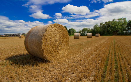 Straw bales after the harvest in late summer Stock Photo