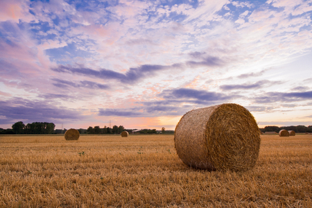 Straw bales after harvest at sunset time