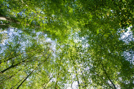 Green nature - looking through the branches towards the blue warm summer sky at sunshine Banco de Imagens