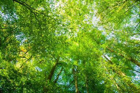 Wonderful green forest landscape in spring with bright sunlight Banco de Imagens