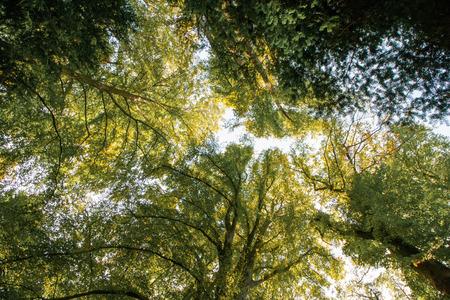 Looking into the trees (Viersen Woodlands in Suchteln, Germany) Standard-Bild - 110038287