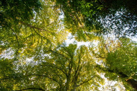 Forest and nature - high treetops and greenery in summer