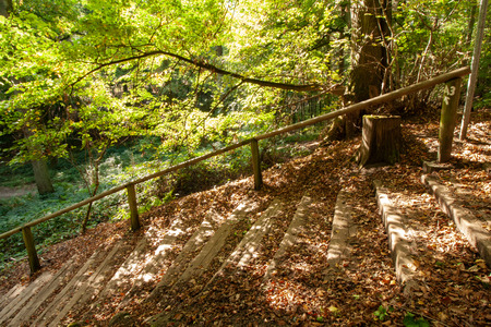 Hiking trail, promenade and stairs in the forest, summer scene in Viersen-Süchteln, Germany Banco de Imagens
