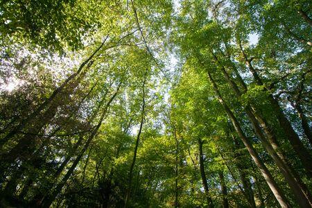 German forest landscape in Viersen Banco de Imagens