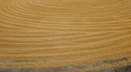 Pile of paddy rice and rice seed on the. Standard-Bild