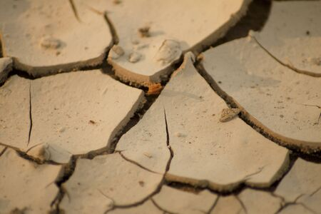 A cracked earth's crust resulting from drought.